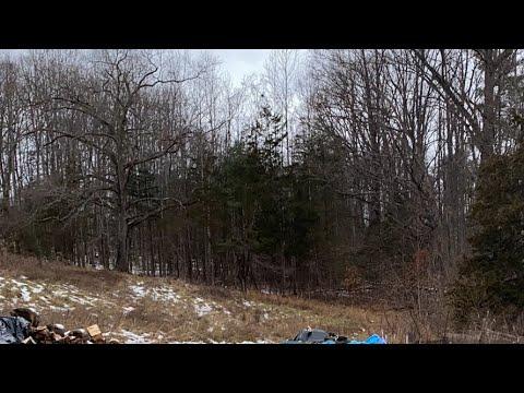 Bigfoot Sasquatch Live Cam a.m.