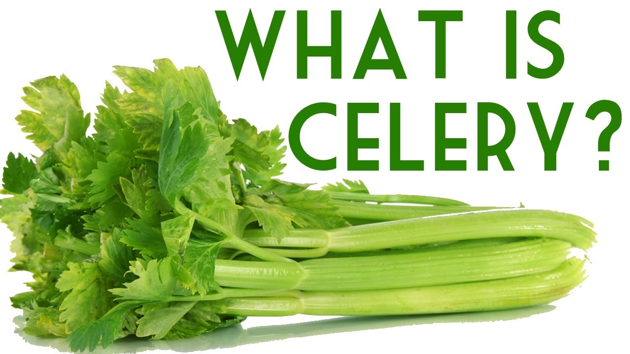 What Is Celery  Health Benefits Of Celery