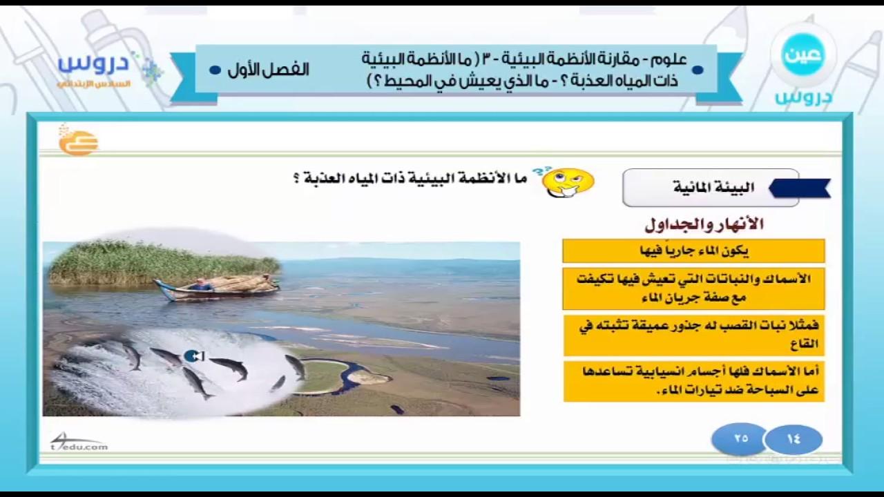 السادس الابتدائي الفصل الدراسي الأول 1438 علوم مقارنة الأنظمة البيئية 3 Youtube