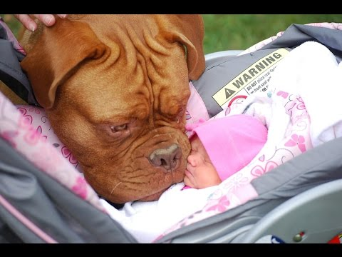 Funny cats , Dogs and babies playing together - Cute Dog & cat & baby compilation Dogs life