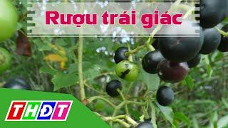 THDT - Rượu trái giác  - Đặc sản miền sông nước