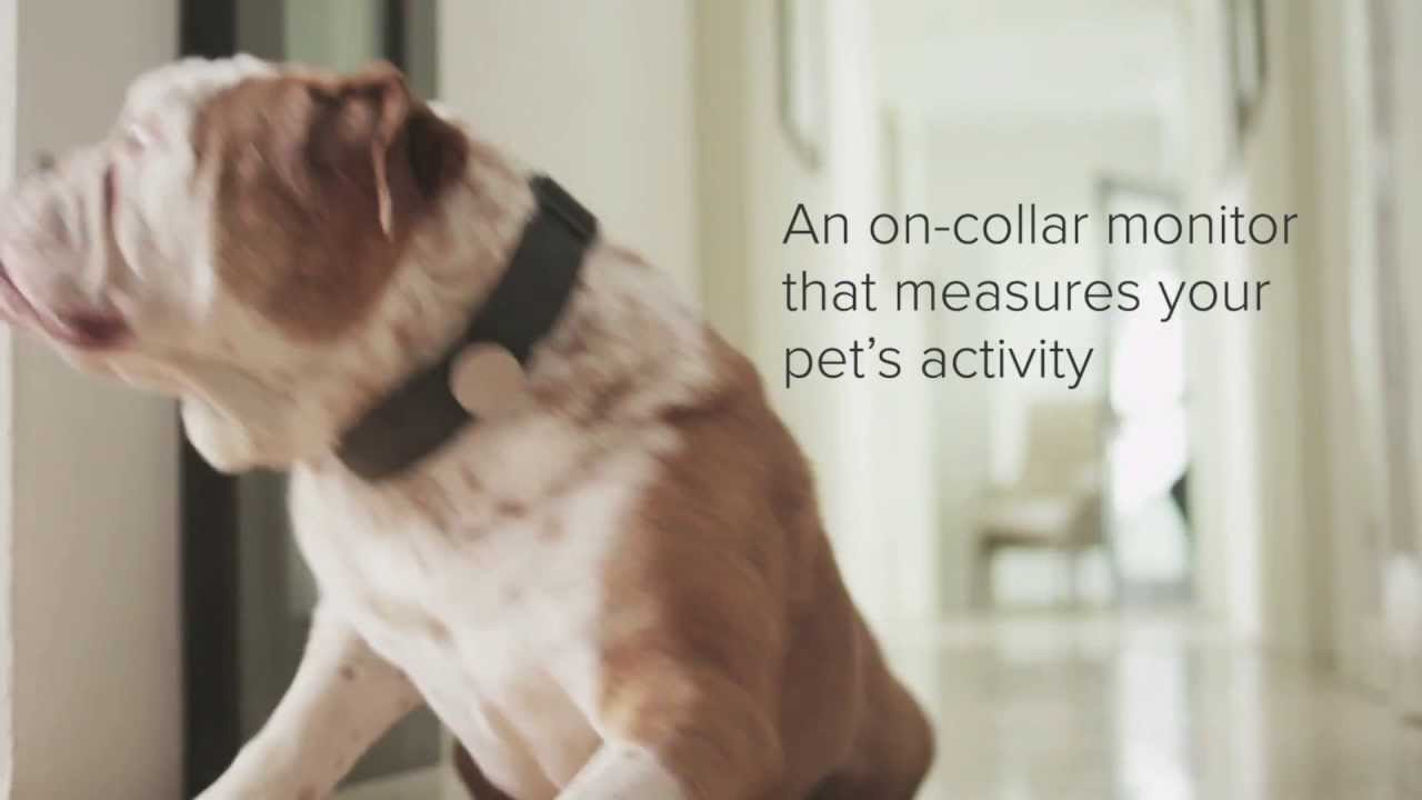 The Whistle Activity Monitor For Pets