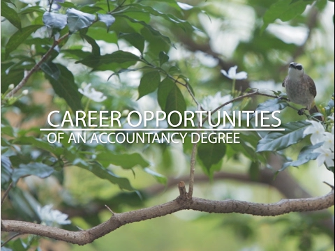 Career Opportunities of an Accountancy Degree