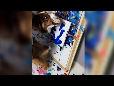 This painting dog in Alberta is raising money for charity