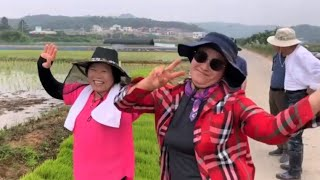 [토종벼 한해 농사] 토종벼 모내기부터 가을 수확 축제…