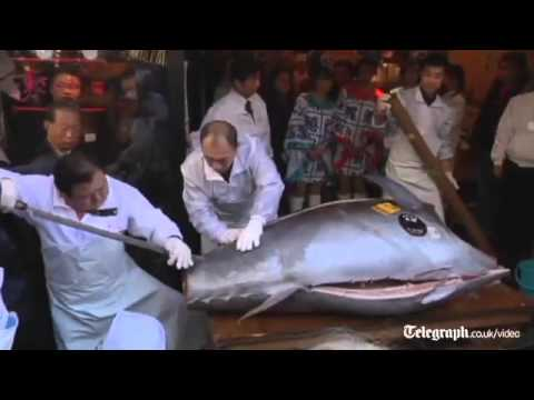 Xả thịt cá ngừ đắt nhất thế giới tại Nhật Bản