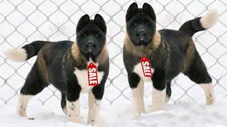 Это Самые Дорогие Породы Собак в Мире