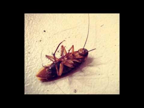 Como matar cucarachas trucos caseros como acabar o el - Como eliminar los mosquitos de mi casa ...