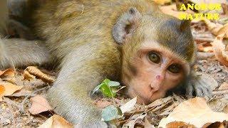 So funny, baby monkey play fun | Angkor Nature