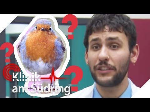 'Ihr wart doch da unten wieder am Vögeln!': Arzt platzt der Kragen | Klinik am Südring | SAT.1 TV