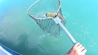 На рыбалку за Амуром Река Или 2021 АМУРЫ ГНУТ И ЛОМАЮТ КРЮЧКИ В ПРЯМОМ ЭФИРЕ Ещё один в капилки