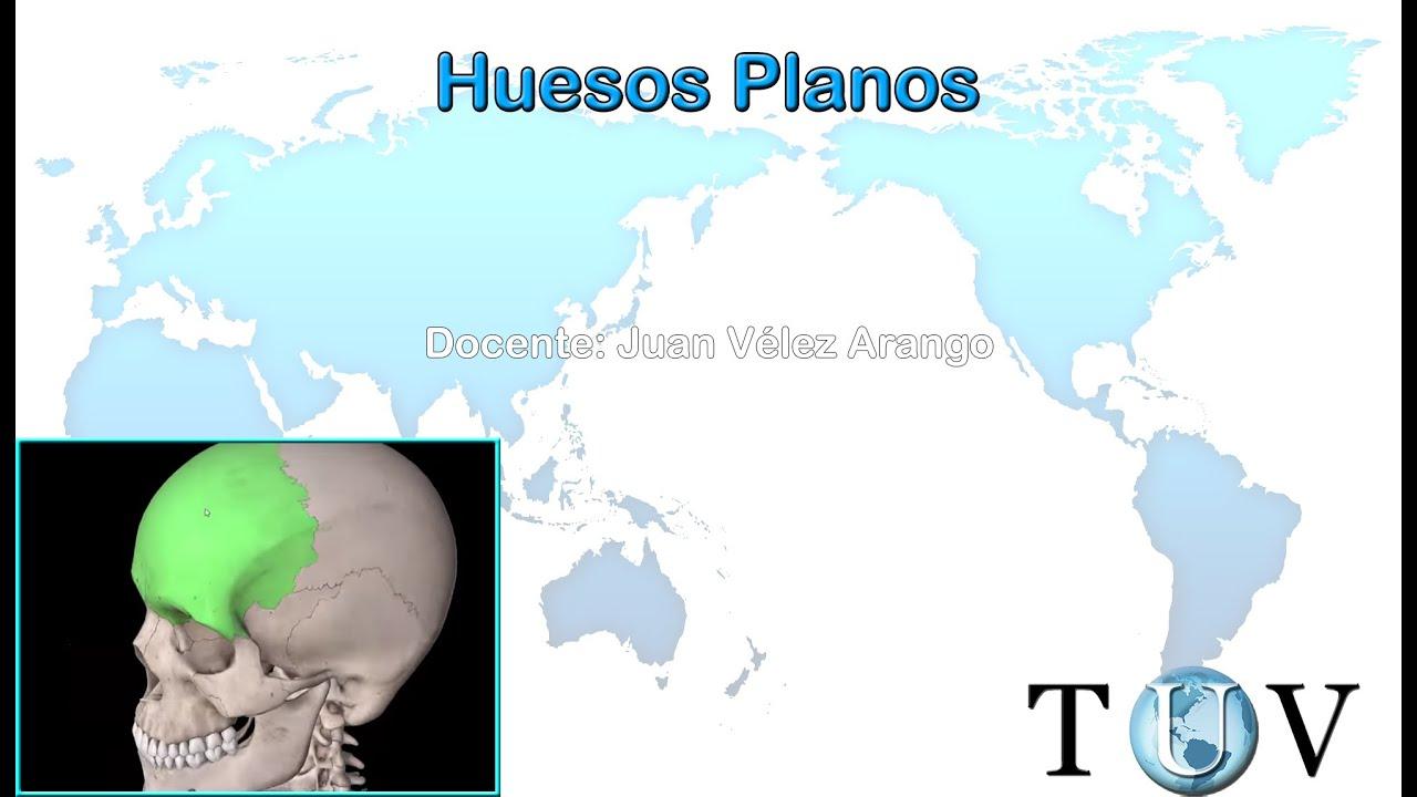 Huesos planos y cortos - YouTube