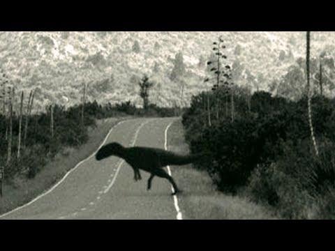 5 Loài Khủng Long Được Bắt Gặp Trên Camera Và Phát Hiện Trong Đời Sống Thực.