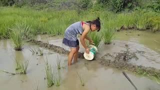 美しい女の子による伝統的な釣り - カンボジアでの釣りの方法 - カンボジア素晴らしい釣りの部分154 thumbnail
