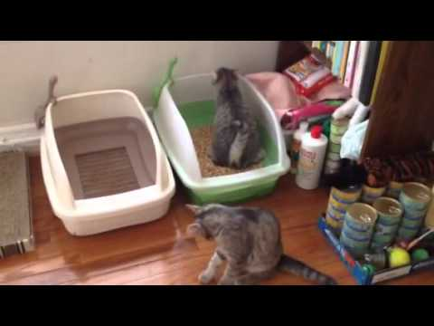 Breeze Litter Box And Pine Litter, For Saving Money