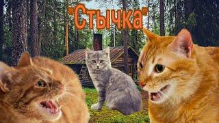 """Коты-Воители 10 серия """"Стычка"""""""
