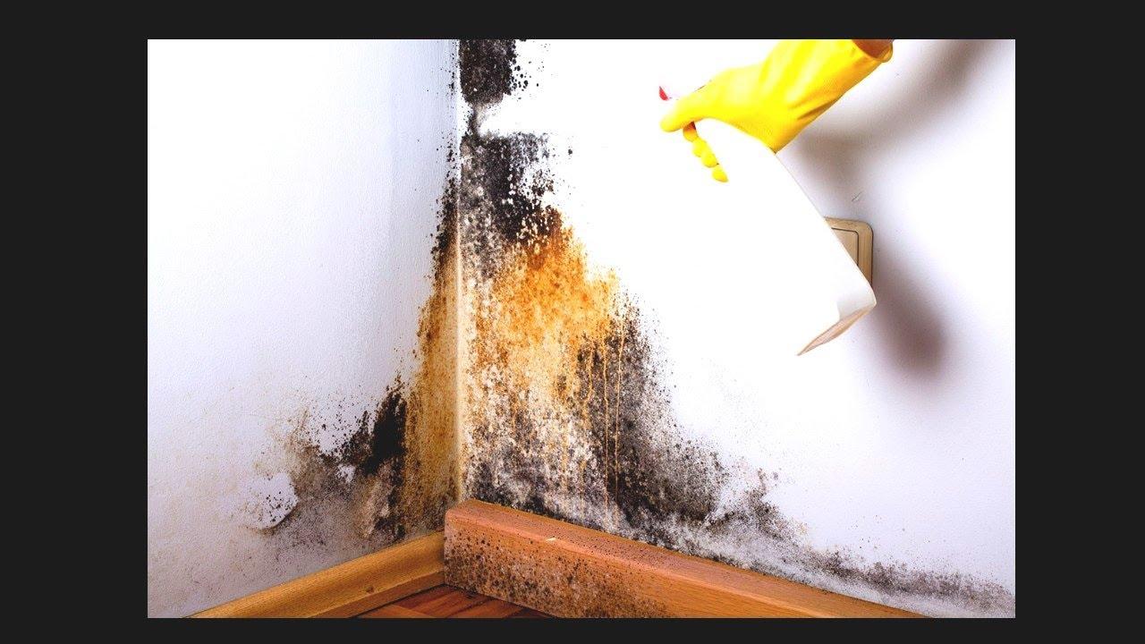 Mould treatment   Madowga guri ku dhasha sida loo hagaajiyo   Qurxinta guryaha tv