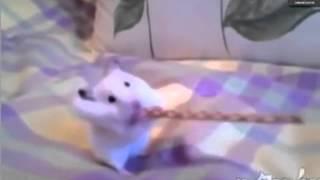 Смешные домашние животные