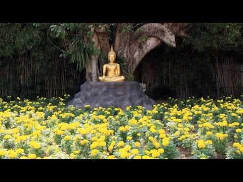Lok khong phueng โลกของผึ้ง (พุ่มพวง ดวงจันทร์) Addy karaoke cover