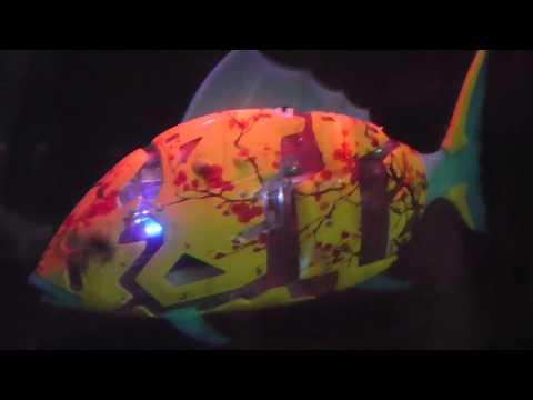 Marine Intelligence Robot