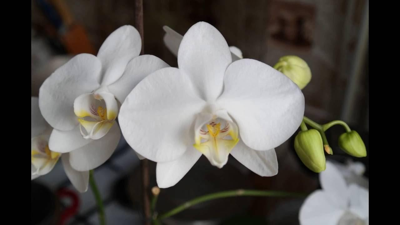 Цветы оптом грунт для цветов