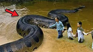 Największe węże na świecie!