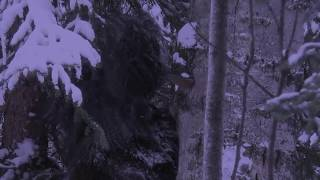 Bigfoot Sighting Near Banff National Park Alberta Canada.