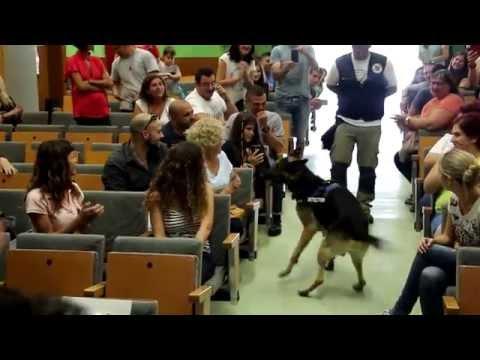 Perro K9 Unidad Policial - Santa Coloma de Gramenet - Agente Bart
