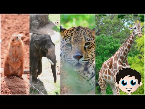 Cute Zoo Animals Baby Animals Giraffe Zebra Elephant Bear Tiger Gorilla Owl Rhino Kinder Playtime