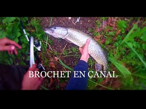 La pêche au printemps le carassin la carpe