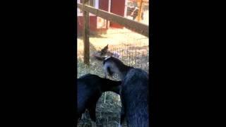 The Pet Psychic Animal Communicator Goes To Friend's Farm