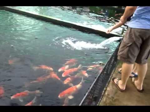 Mainland tropical fish farm Singapore
