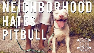 PITBULL TIED UP IN BASEMENT LACKS SOCIALIZATION | New York Bully Crew
