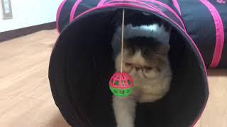 催眠術をかけられたかのように一瞬で眠りに落ちる猫