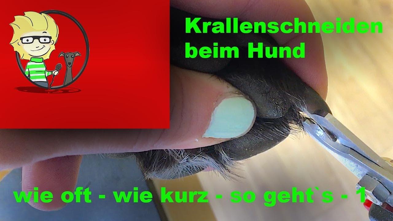 (FOLGE 12) Krallen Schneiden Beim Hund - Wie Kurz - Wie Oft - So Gehts - 1/2 - YouTube