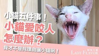 小貓愛咬人怎麼辦?小貓最常見的五個問題!【好味貓知識】EP6