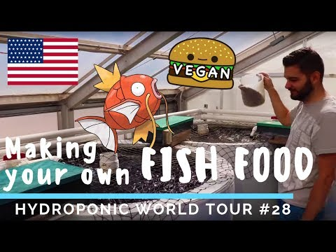 AQUAPONICS: How to make your own FISH FOOD