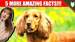 5 AMAZING FACTS ABOUT THE COCKER SPANIEL