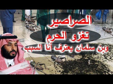معجزة الصراصير التي غزت الحرم وبن سلمان يعترف أنا السبب