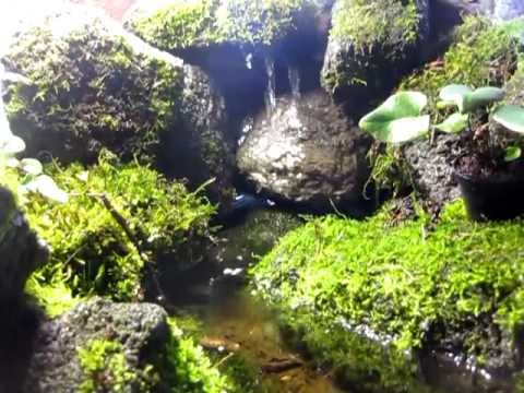 Waterfall Terrarium With Moss And Ferns Youtube
