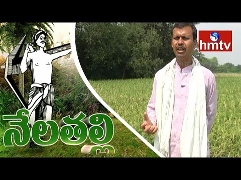 Success Story Of Organic Farming by Inspirational Farmer Suresh Kumar Reddy | Nela Talli | hmtv