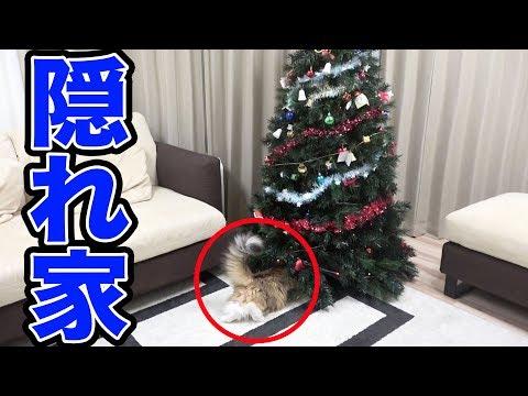 猫が最強の隠れ家を見つけてしまった・・・