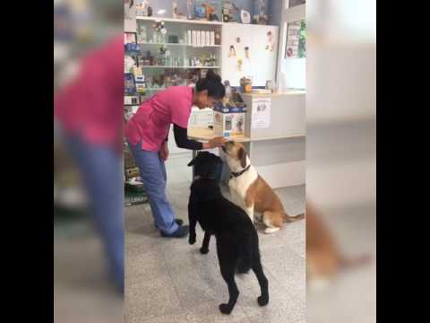 Happy dogs at the Veterinary by TRO and SHIVA