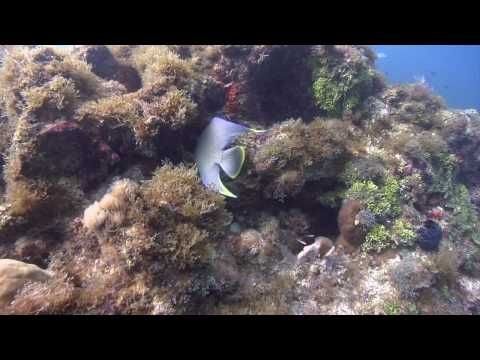 Oil Spill Truth: The Reefs of the Dry Tortugas