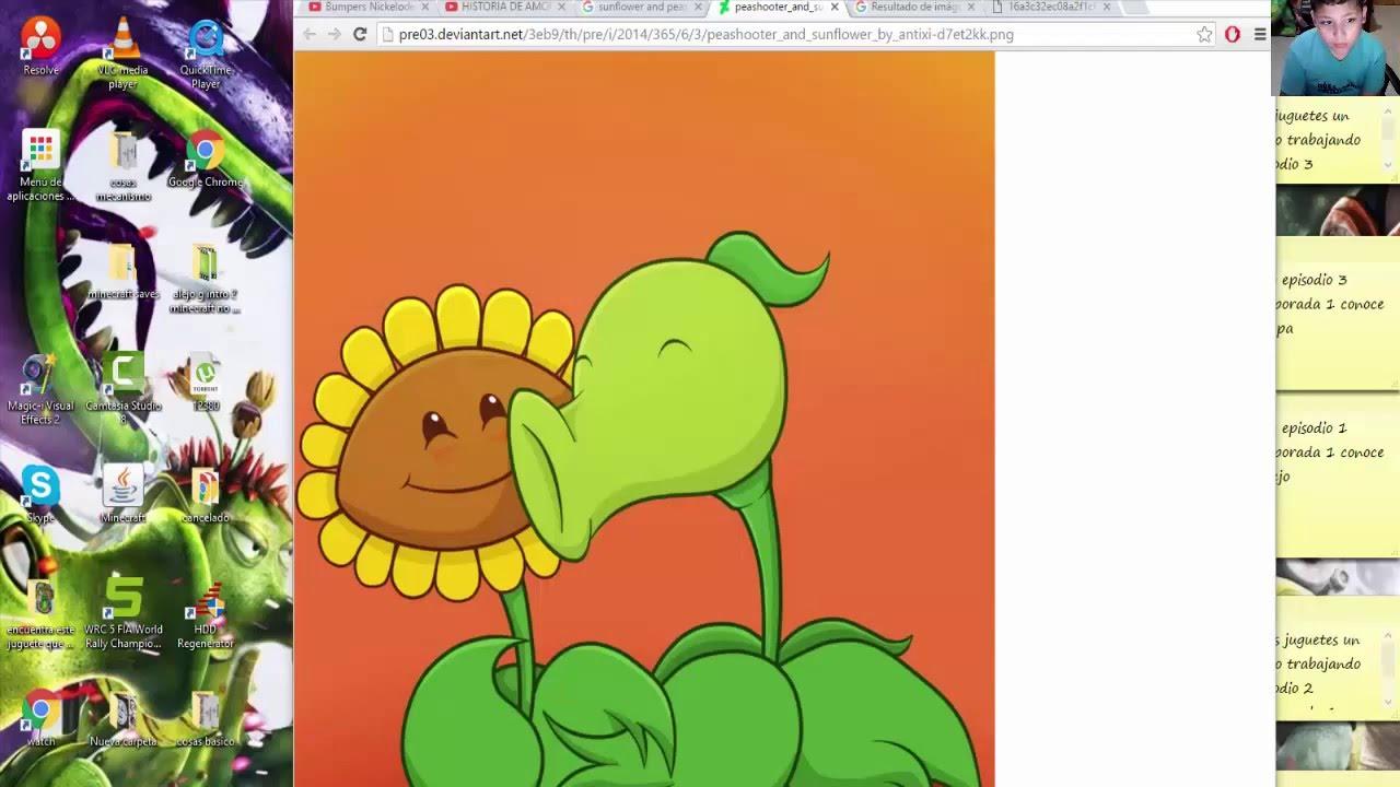 la historia de amor de girasol y lanzaguisantes plantas contra