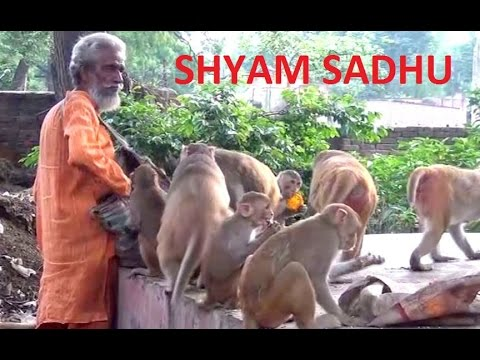 15.Feeding the monkeys - Shyam Sadhu - A must watch video
