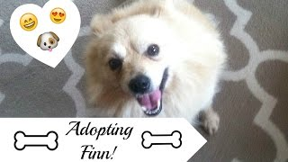 Adopting Finn!  (Bringing Home Our Rescue Pup!!!)