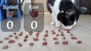 Raw or boiled meat? Which will the cat choose?