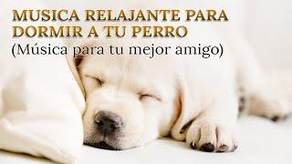 Relax my dog música para dormir perros