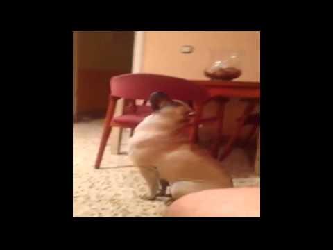 Un perro 100% español!!!!